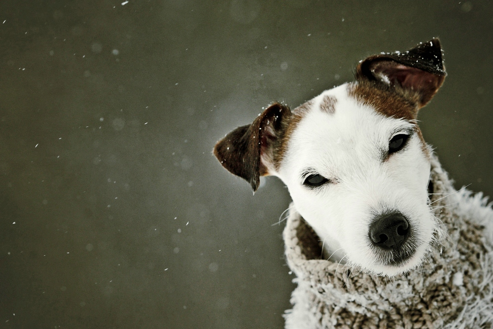 Es schneit....!!!