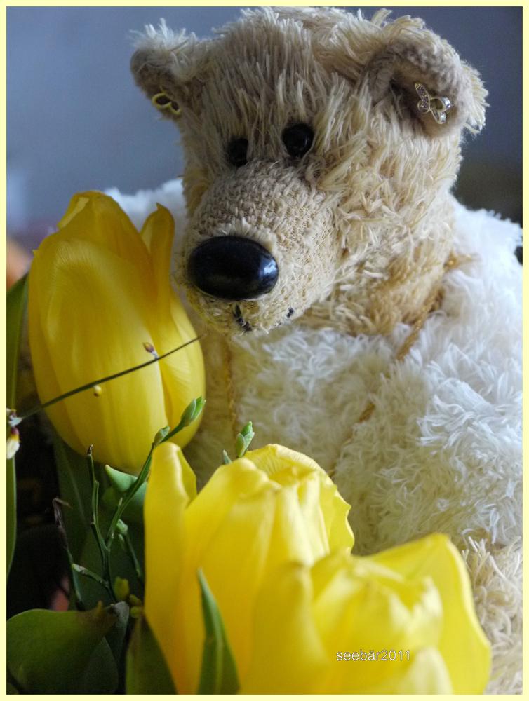 Es sollte euch alle ein Frühlingsgruß sein......