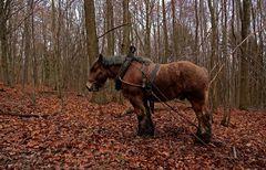Es steht ein Pferd auf`m Flur im Wald .....