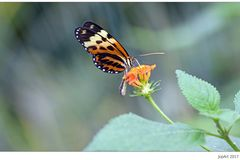Es war einmal ein buntes Ding, ein sogenannter Schmetterling...