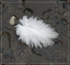 * Es war einmal ein kleiner Vogel... *