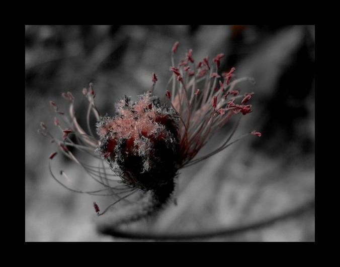 Es war einmal eine Mohnblume...