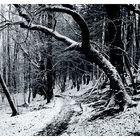 Es war einmal im Märchenwald...