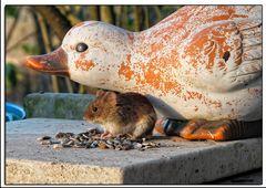 Es war für die Vögel gedacht aber die Maus hatte auch Hunger