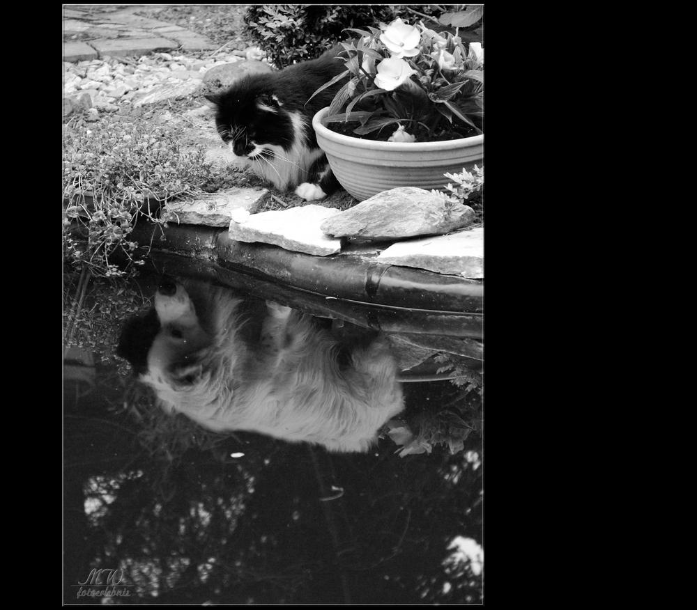 es war wohl doch zu viel Katzenminze . . .