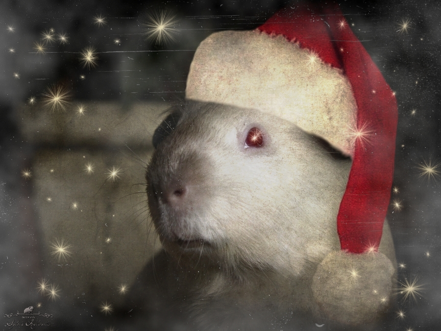 Es Weihnachtet...
