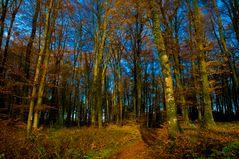 es wird Abend im Herbstwald