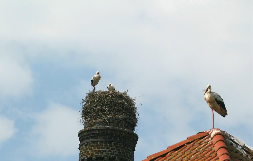 es wird eng im Nest