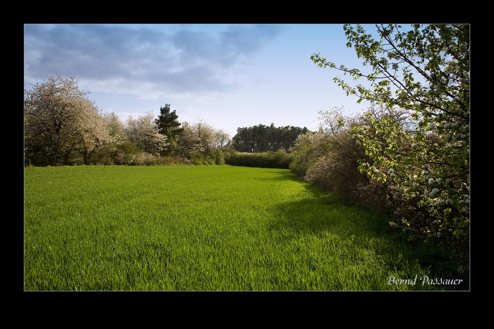 Es wird Frühling _01...