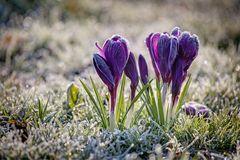 es wird Frühling ...