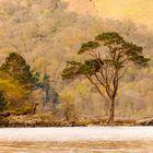 Es wird Frühling am Loch Lomond