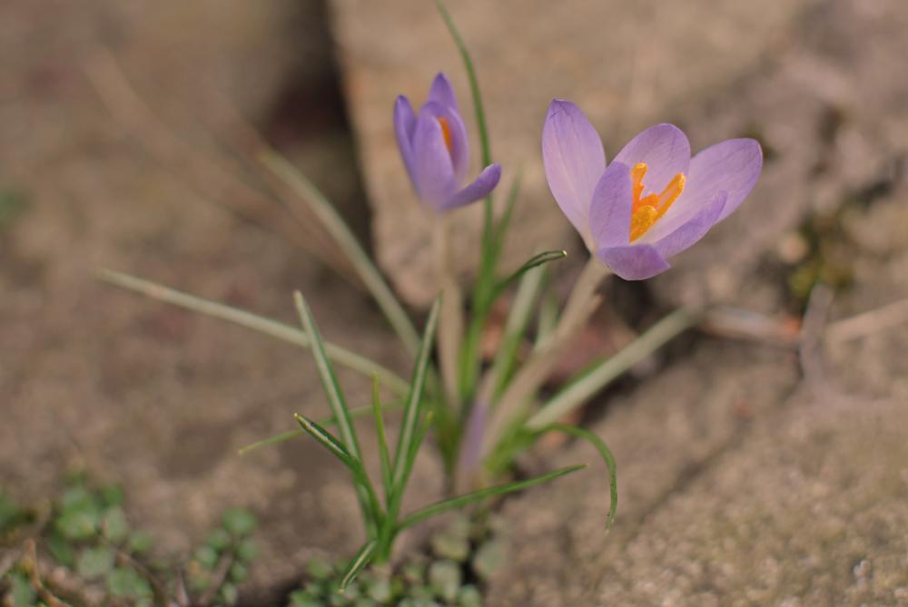 Es wird Frühling ..........