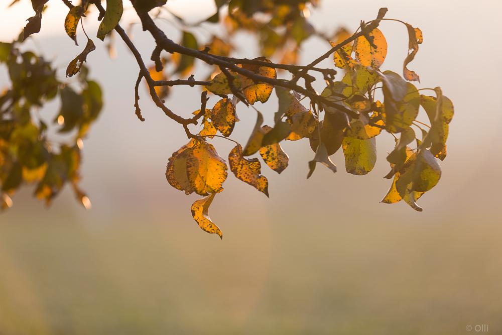 es wird Herbst # 2