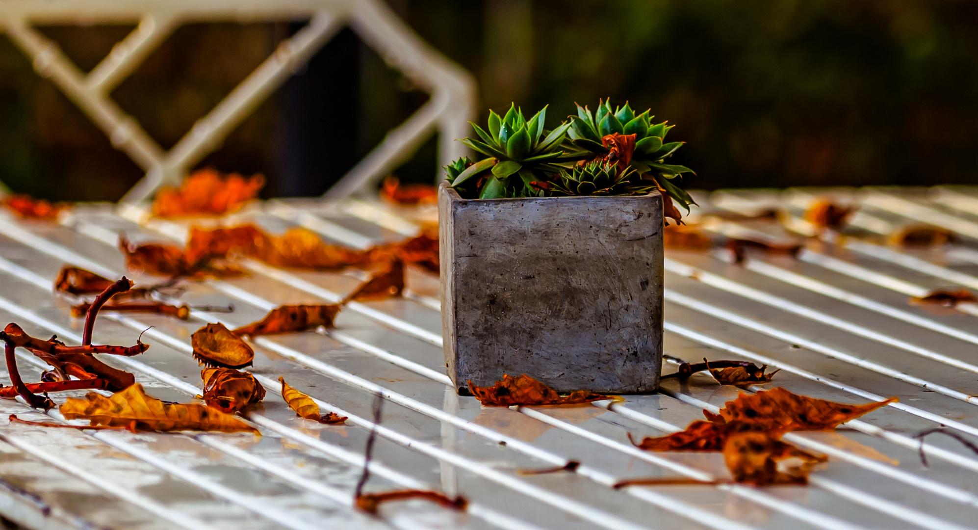 Es wird Herbst #2