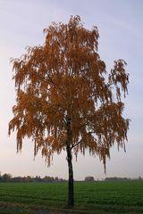 Es wird Herbst... #4