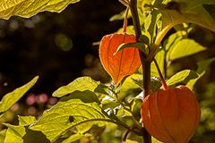 Es wird ....... Herbst!