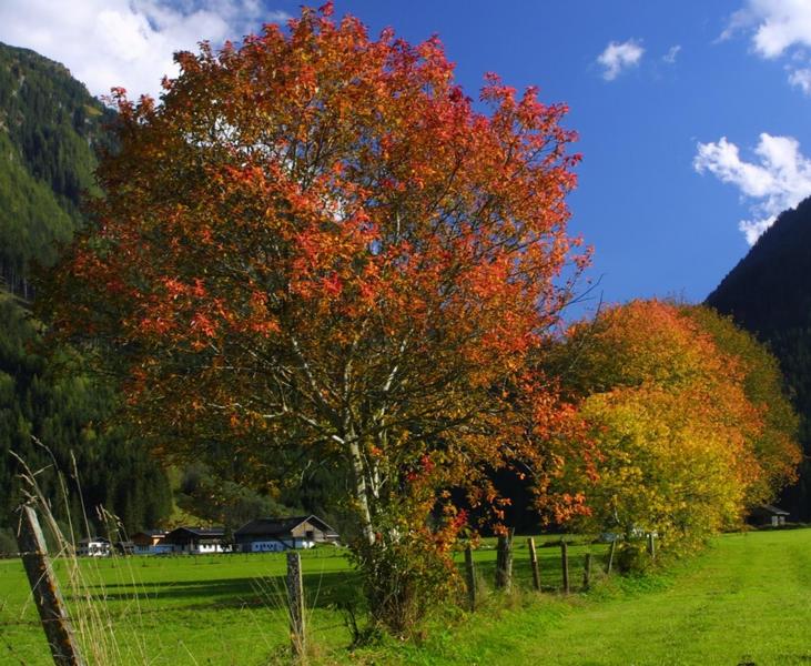 Es wird Herbst....