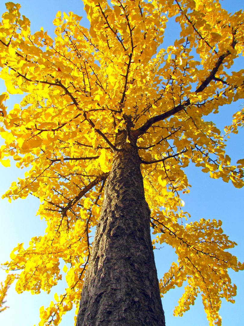 Es wird mal wieder Herbst