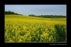 es wird wieder gelb