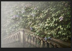 _escaliers lilas_