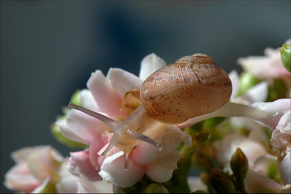 escargot.