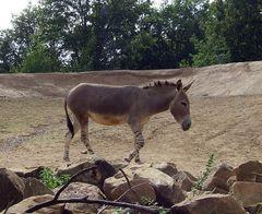 Esel oder Zebra?! ;)