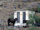Esel-WC ...auf Thirassia
