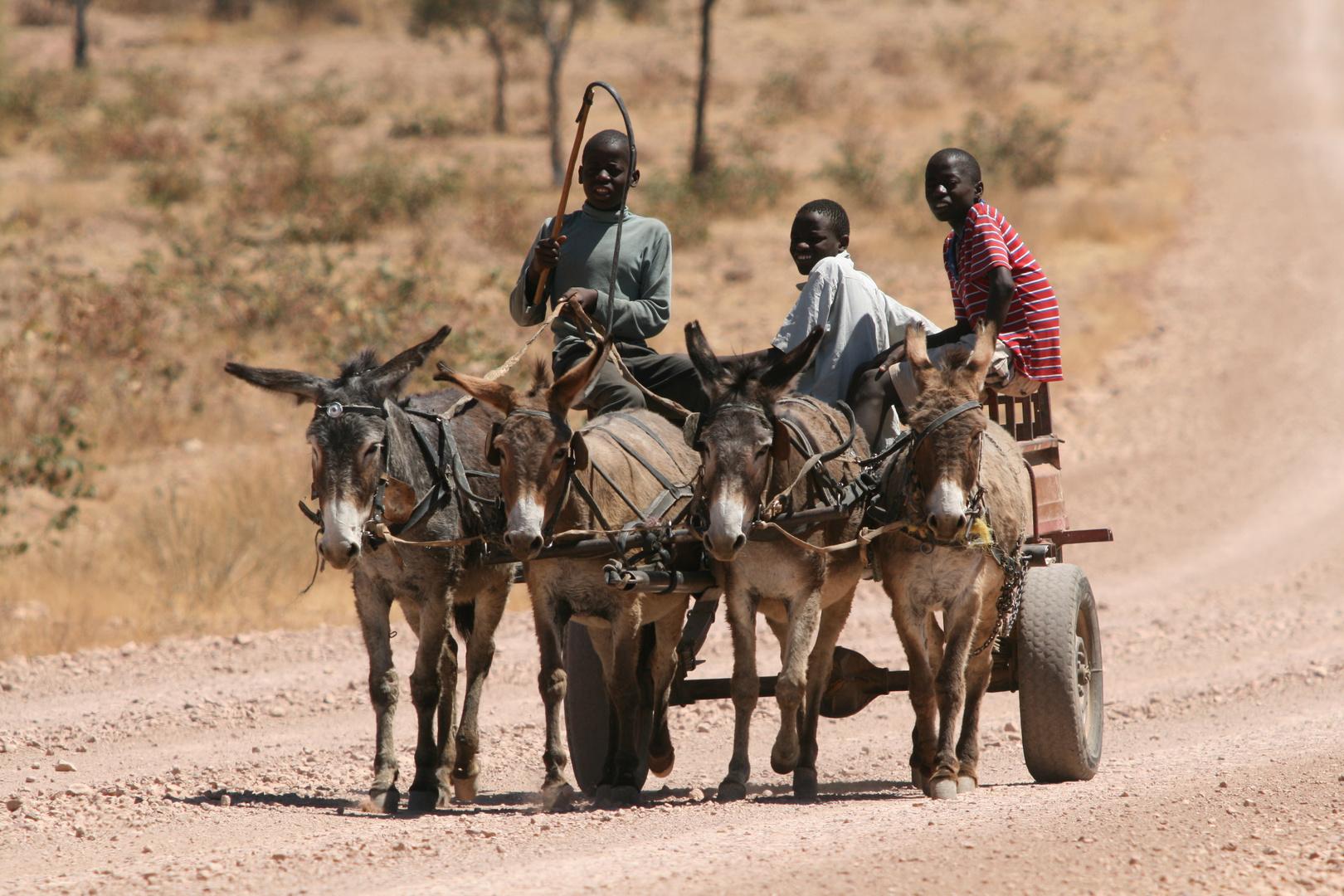 Eselkarren in Namibia