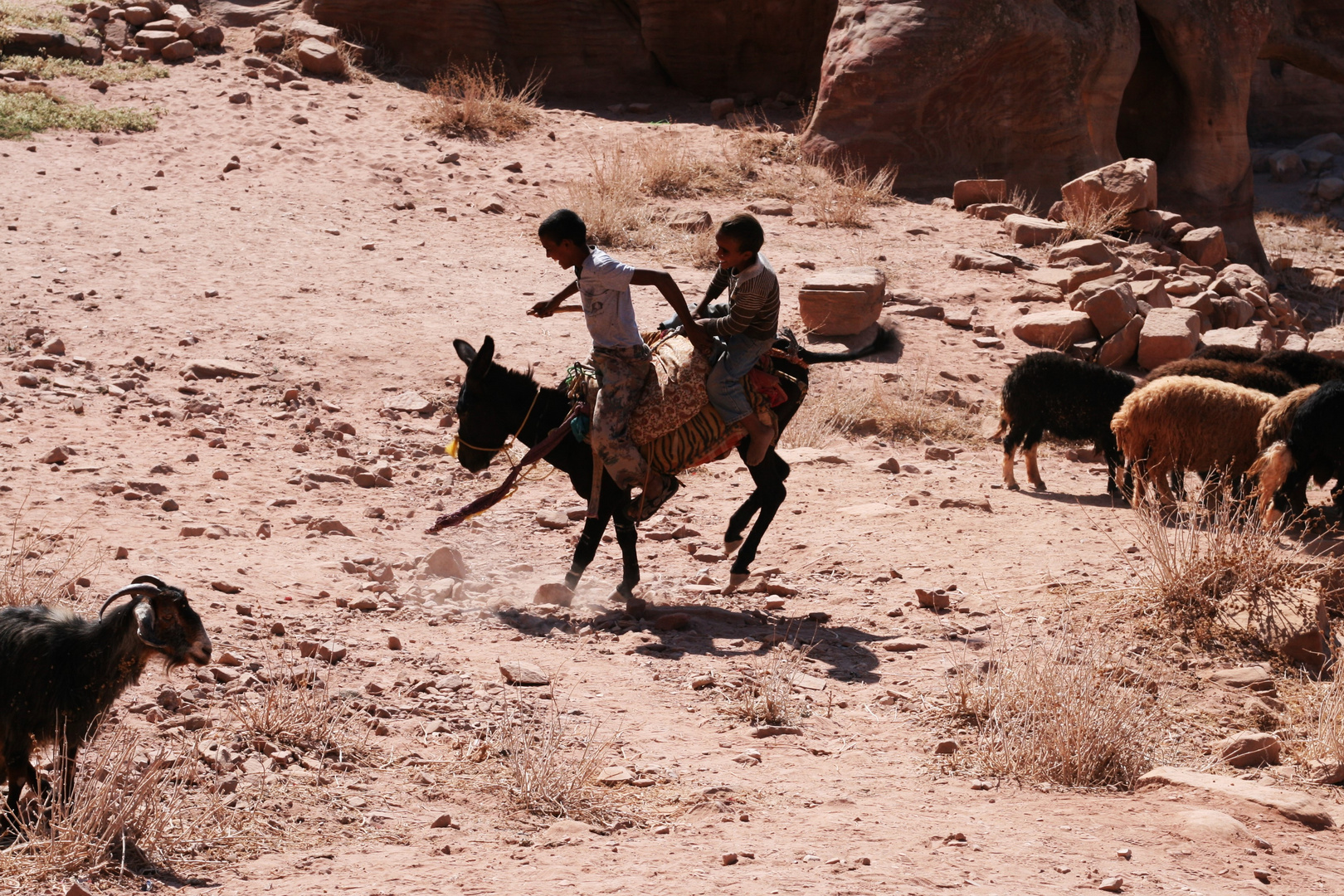 Eselrodeo in Petra (Jordanien)