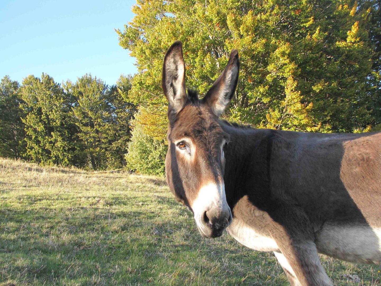 Eselwanderung in den Flitterwochen