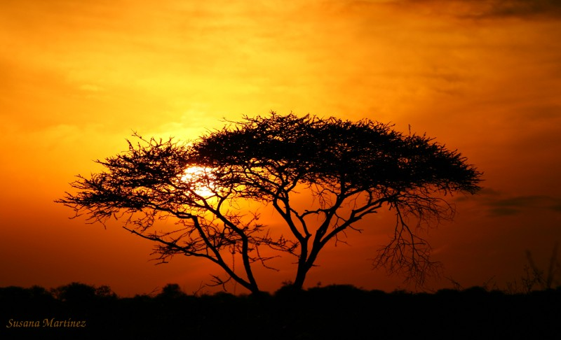 Esencia africana