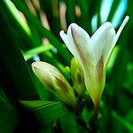Esencia de Primavera