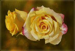 Esperanza rosa amarilla