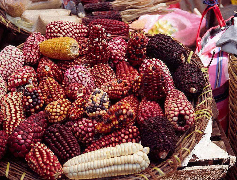 Espigas de maíz en el mercado de Pisac.