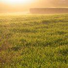 esplendor en la hierba