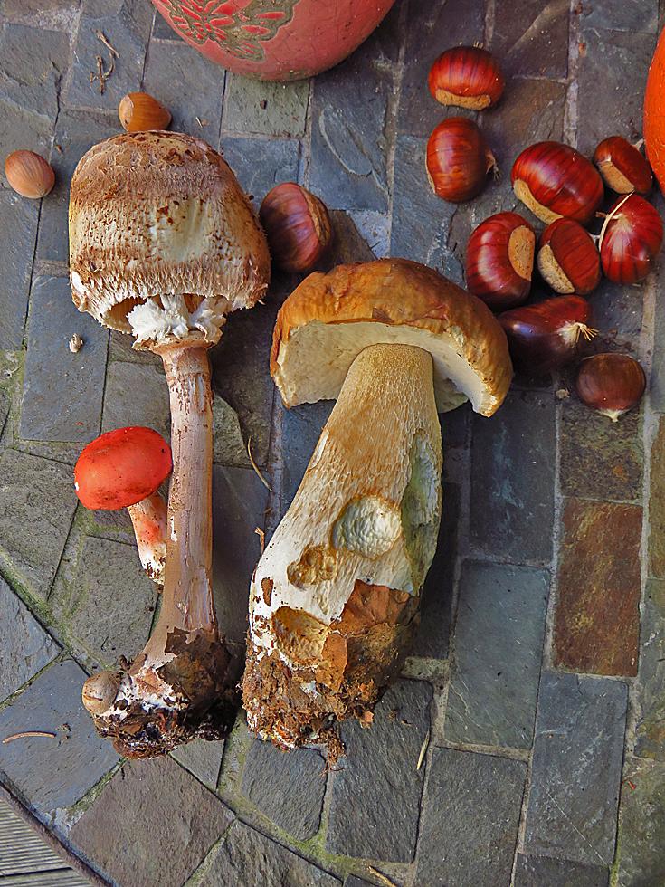 Essbare Pilze Hessen