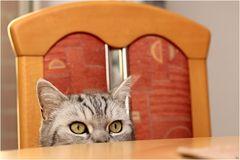 Essen fertig ?