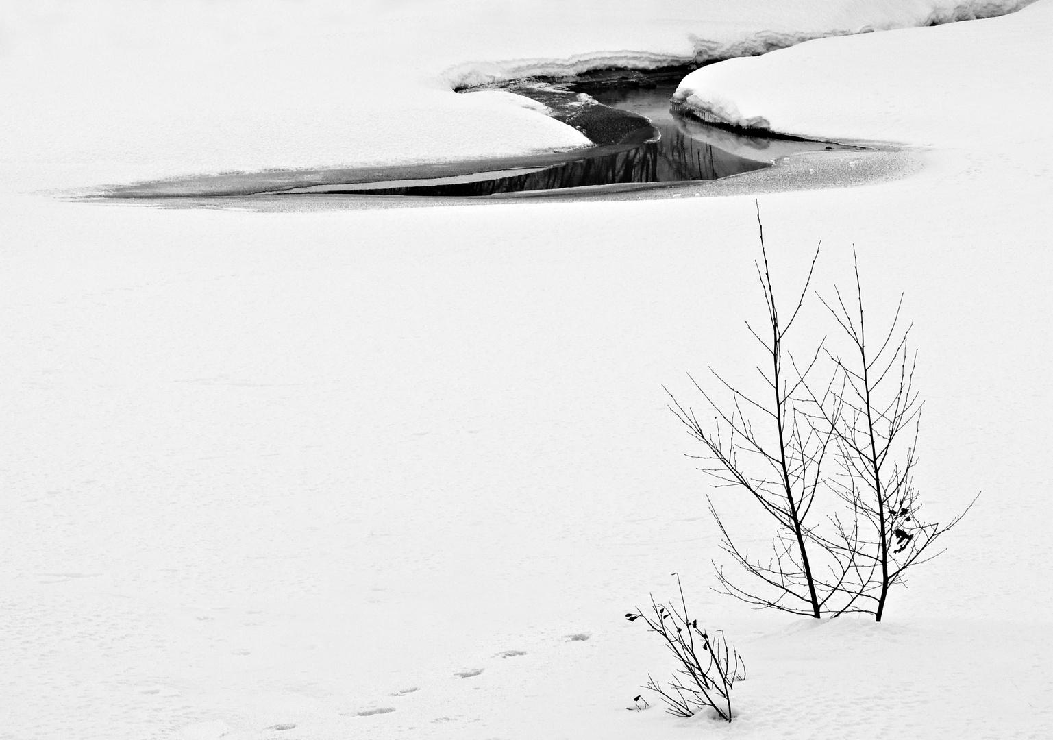 eSSenzialità invernali