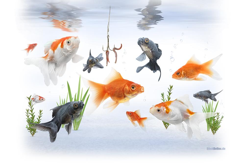 Esst mehr Fisch!
