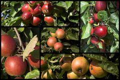 Esst mehr Obst