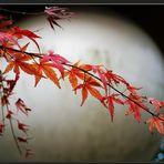 Estampe Japonaise : la branche et la Lune