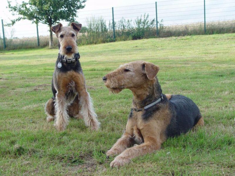 Esther & Lucky - Terrier