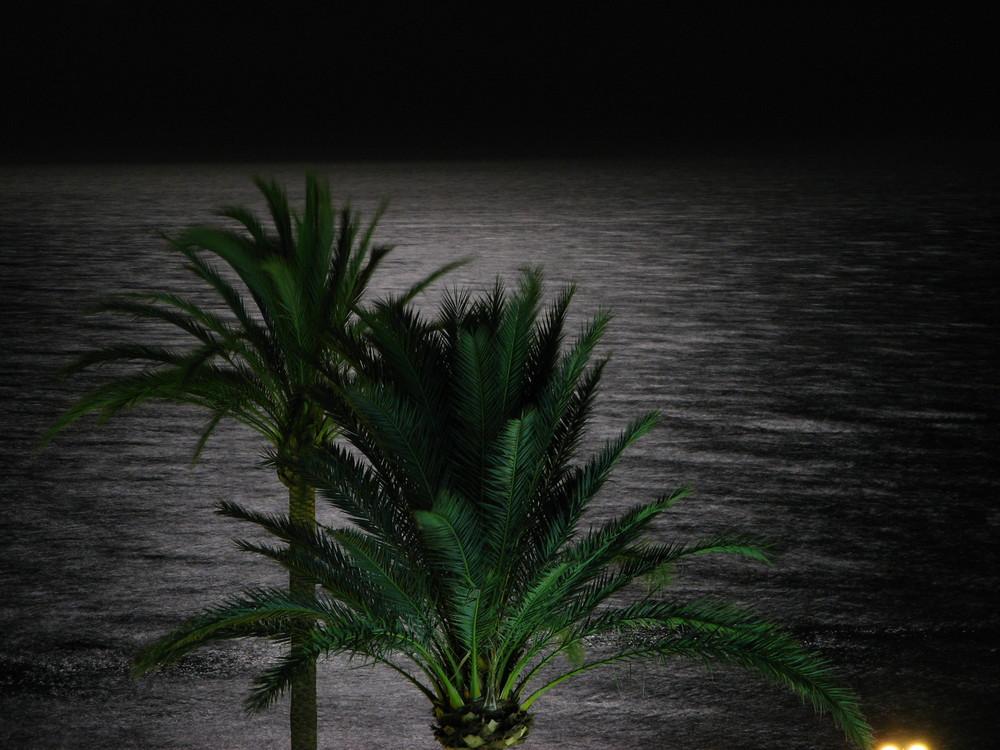 Estupendas Noches de Verano en la Playa