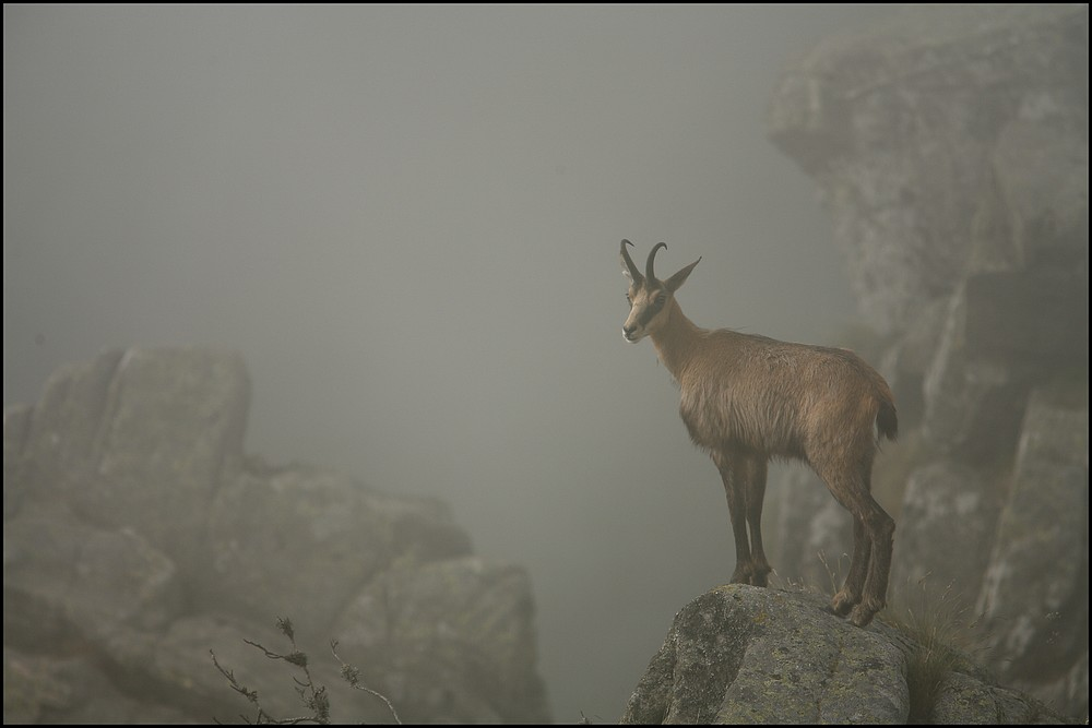 ....et dans la brume....
