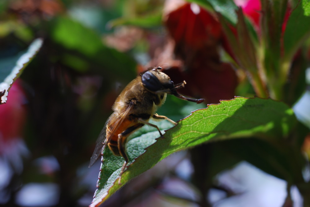 et l'abeille