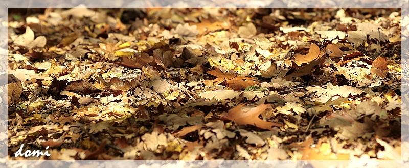 étalage de feuilles mortes