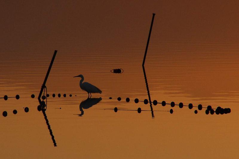 étang de Canet, pyrénées orientales