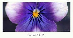 - eternity -