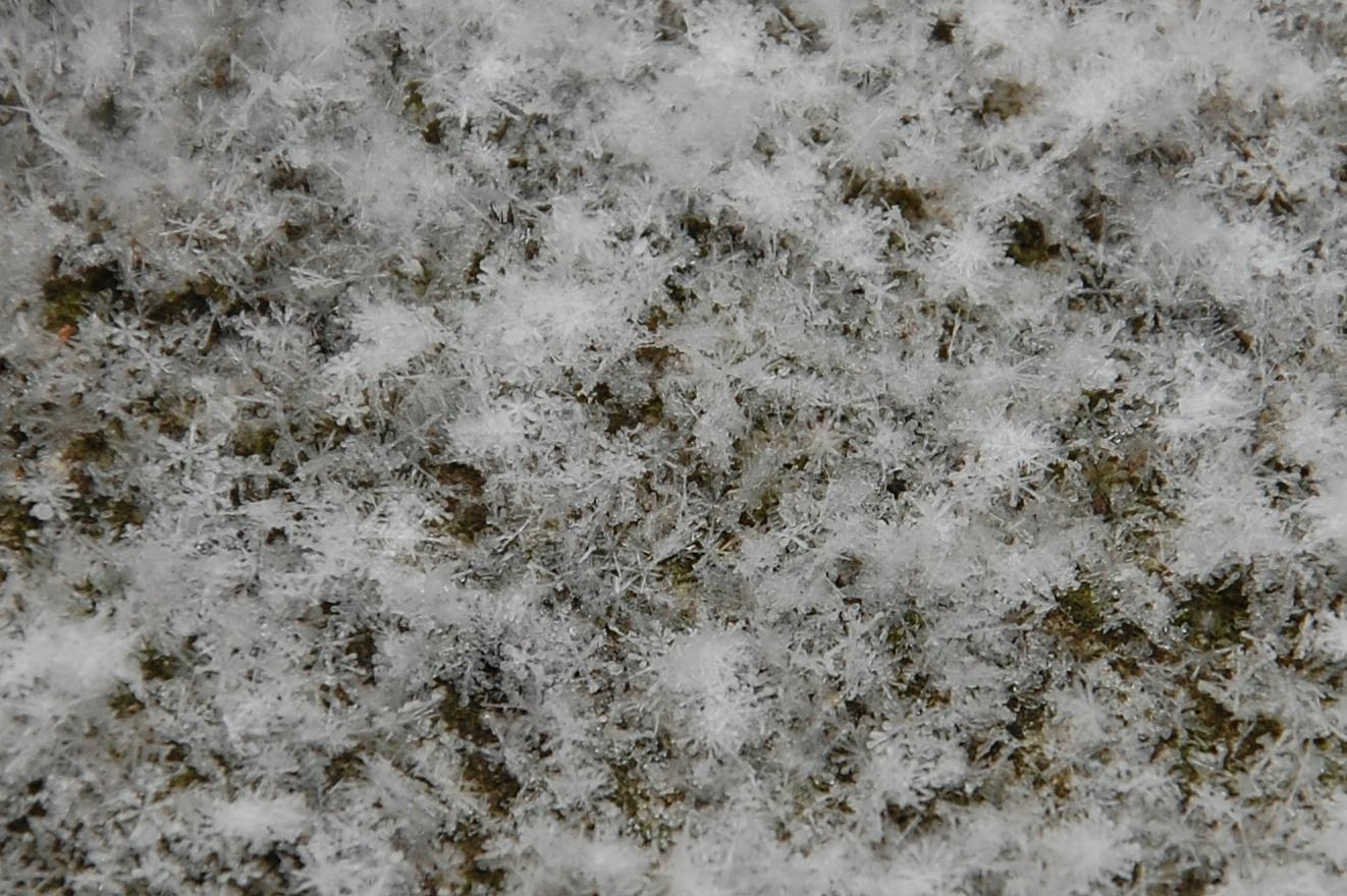 Etoiles de neige