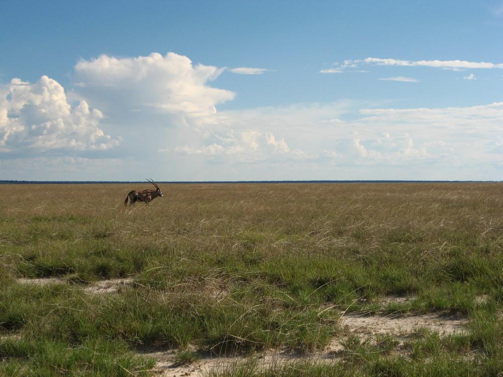 Etosha, Namibia, mit ORYX